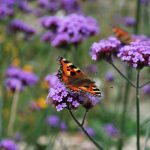 St Davids – Wales' First Bee Friendly City
