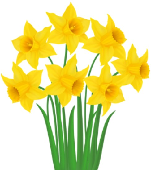 St Davids Day Annual Window Display and Competition 2021